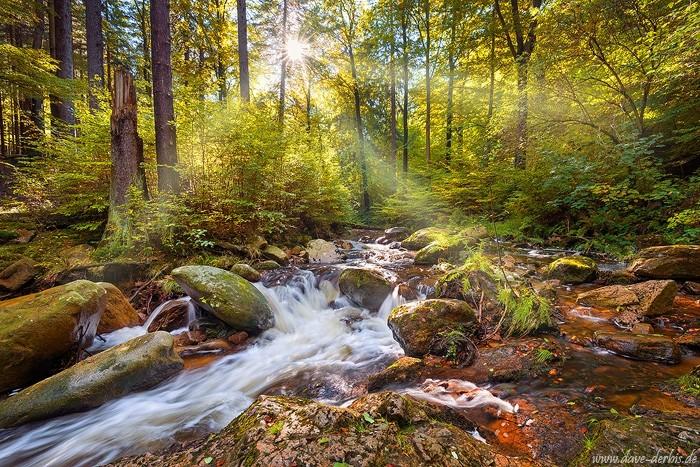 Spirit Garden - Ilsetal im Harz im Gegenlicht