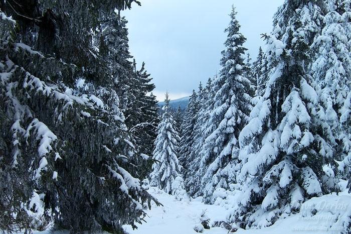 Der Weg hinauf zur Wolfswarte