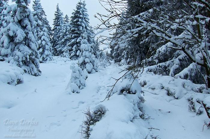 Wanderung durch den Winterwald
