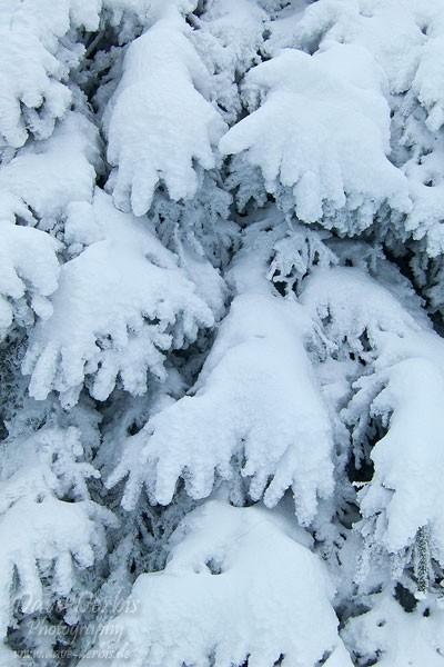 Schneebedeckte Äste im Wald
