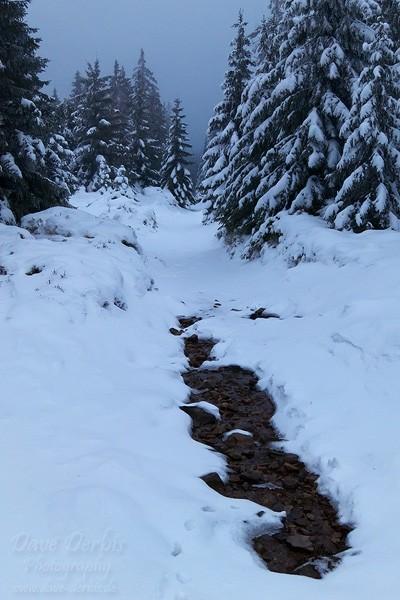 Winterwald entlang der Wanderung zur Wolfswarte