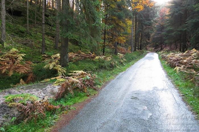 Schrammsteine Wandern - Bergauf