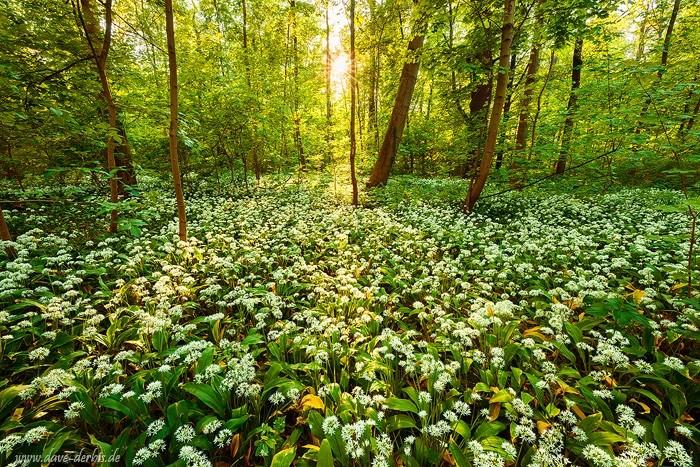 Abendstimmung im Wald - geschärft