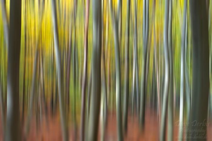 Wald Abstrakt mittels Kamerabewegung während der Aufnahme