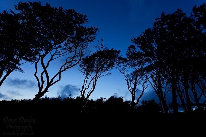 Silhouetten der Windfänger am Strandwald zur blauen Stunde