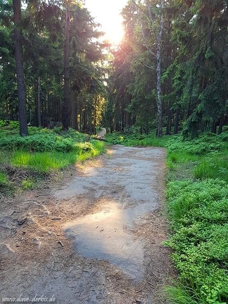 Die Sonne erhellt den Weg durch den Wald