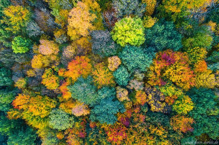 Herbstwald von oben im Harz