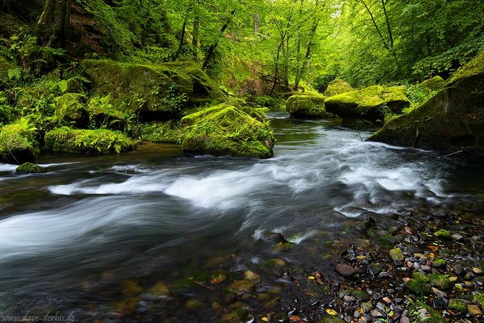 Wald bei grauem Himmel und Regen fotografieren