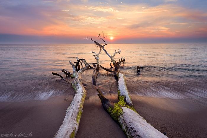 Sonnenuntergang Ostsee umgefallener Baum
